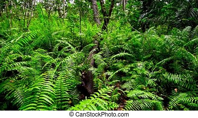 Scenic view of jungle with ferns - Scenic view of beautiful...