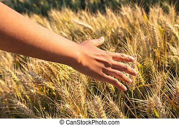 Young adult woman female girls hand touching a field of barley