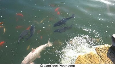 Fishes in water. Group of fish, motion. Fishing for...