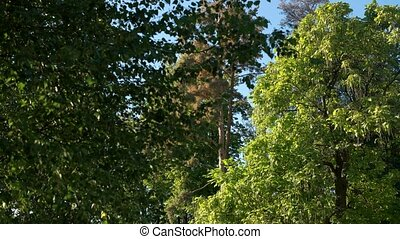 Park in summer. Trees and trimmed shrubs. Why is nature...