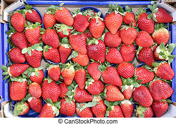 many baskets Ripe red strawberries grown using the...