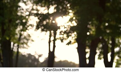 Blurry trees and sun. Blurred tree foliage. Live and...