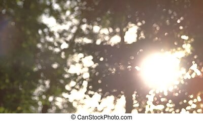 Blurry foliage and sun. Blurred tree leaves.