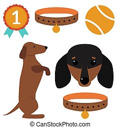 Dachshund dog playing vector illustration elements set flat style puppy domestic pet accessory.