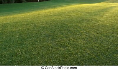 Green lawn and sunlight. Golf field surface.