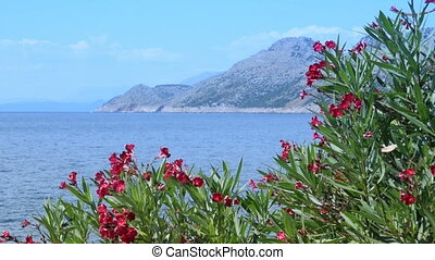 blooming oleander, sea and mountains in the background