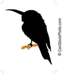bee-eater - silhouette of bee-eater