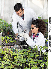 Biologists with seedlings in greenhouse