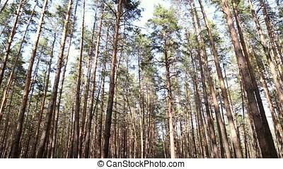 Handheld shooting people walking in the woods