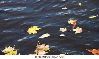 Tree leaves in slow flowing river