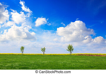 Spring trees and blue sky.