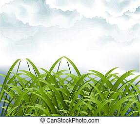 Vector illustration - Green grassland and storm cloud ,...
