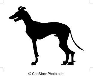 greyhound - silhouette of greyhound