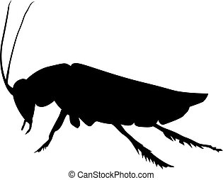 cockroach - silhouette of cockroach
