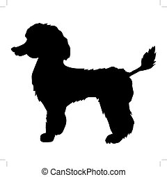 poodle - silhouette of poodle
