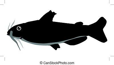 catfish - silhouette of catfish