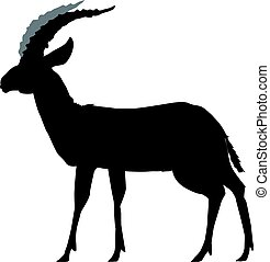 gazelle - silhouette of gazelle