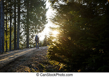 Woman hiker resting on a mountain road, sun shining through...