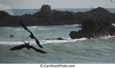 Cormorant fishing in super slow motion, pacific ocean - Long...