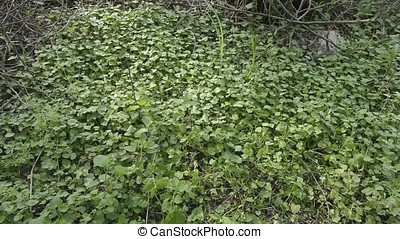 Trailing Vegetation Motion Backgrounds - Trailing vegetation...