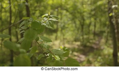 Forest Leaves with Path Background - Sharp clear foreground...