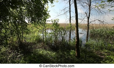 Marsh Forest Border at Twilight - Marsh forest border at...