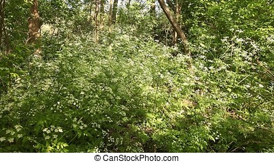 Mysterious Shrub in the Middle of Wood - Mysterious shrub in...