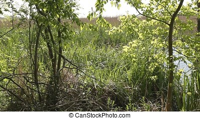 Rushes Reeds and Canes on Marsh - Rushes reeds and canes on...