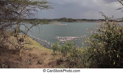 Pink Flamingos in lake, Tanzania, Eastern Africa