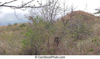 Find the giraffe among the grass in Serengeti National Park,...