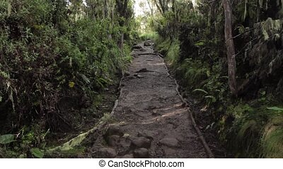 Track on Kilimanjaro on the Machame Route Whiskey, 1 day