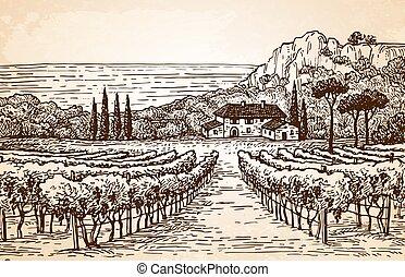Vineyard landscape on old paper