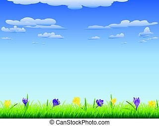 Crocus in the Grass - Spring flowers, colorful blooming...