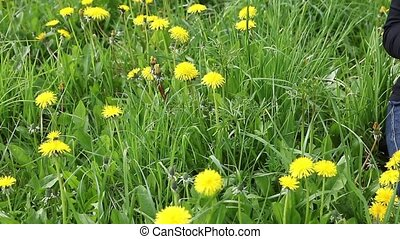 Woman forming a wreath of dandelions footage - Moving camera...