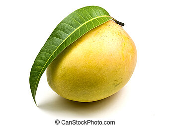 Mango - New season mangoes isolated on white background
