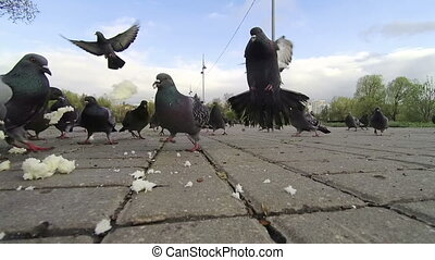 People feed pigeons on the street