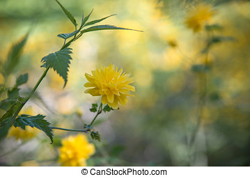 Yellow wildflower background - Shallow depth of focus,...