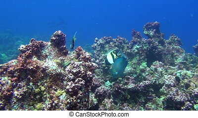 Fish on background underwater landscape in deep sea of...