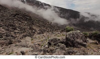 Track on Kilimanjaro on the Machame Route Whiskey. 3 day on...