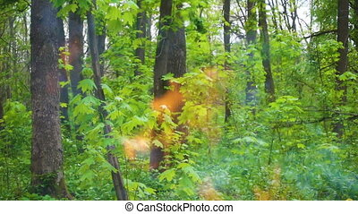 Fire on green forest background, wildfire concept, slow motion