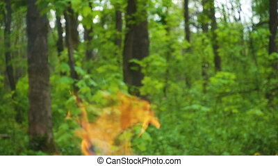 Fire on green forest background, wildfire concept, slow...