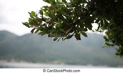 Leaves on a tree in the rain. Spring rain in Montenegro.