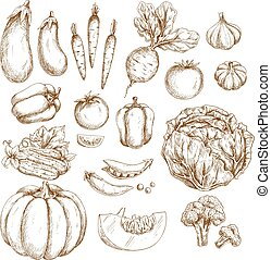 Sketch farm vegetables isolated icons set - Farm vegetables...