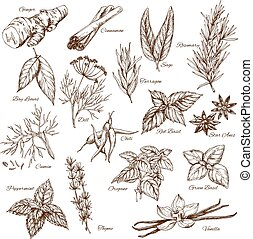 Vector sketch icons of spices and herb seasonings