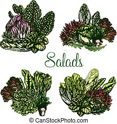 Vector farm salads or leafy lettuce vegetables - Salads and...