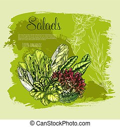 Vector poster salads or leafy lettuce vegetables - Salads...