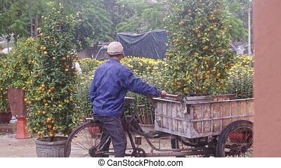 Workers Load and Carry Tangerine Trees on Cart Platform -...