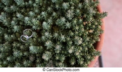 Wedding rings on a cactus in a pot. Wedding jewelry.
