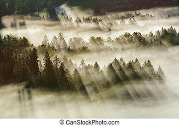 Sun Rays Over Foggy Oregon Forest