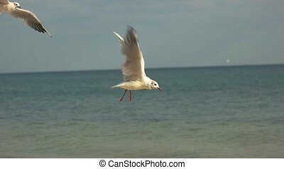 Gulls on sea background. Birds flying in slow motion....
